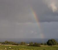 raindboww